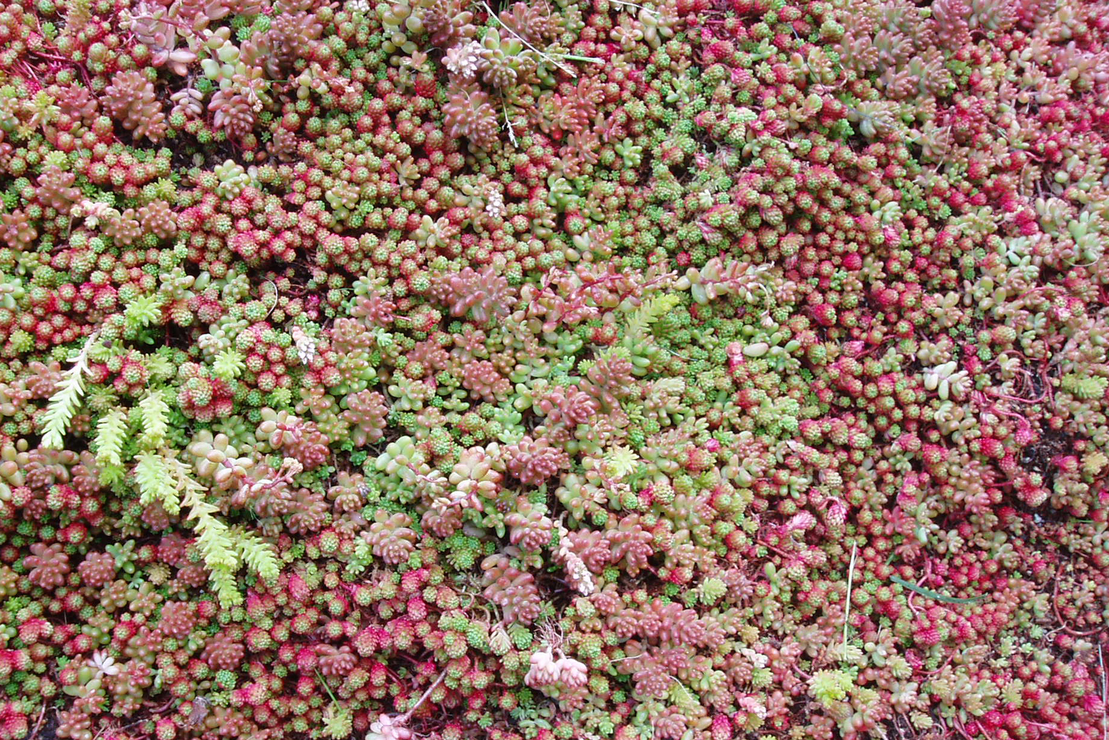 Green Roofs And Turf Roofs Benefits And Design