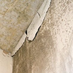 Mould Caused by Condensation