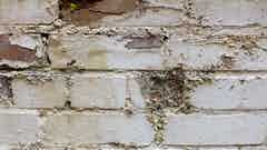 Symptoms of Penetrating Damp