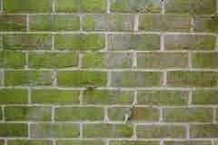 Moss growing on brickwork