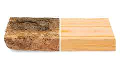 Roxil Preserver protects against woodworm infestation