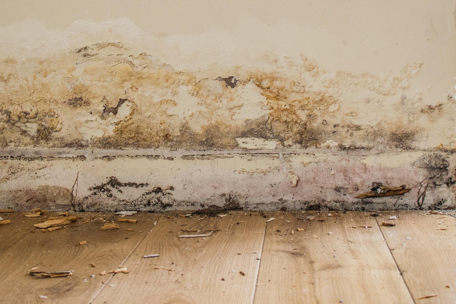 Rising Dampness On Interior Walls