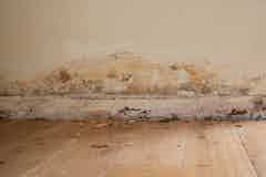 Symptoms of rising damp