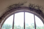 Mould growth caused by condensation