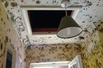 Black mould growth