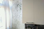 Mould in kitchens