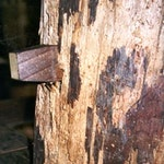 Woodworm Affected timbers