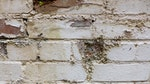 Penetrating Damp Symptoms