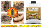 Soluguard Woodworm Treatment kills and protects at all stages of the lifecycle